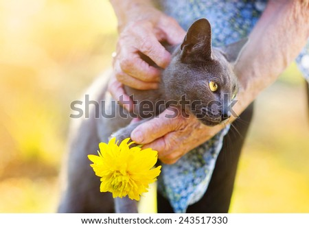 Senior woman in apron with her gray cat and yellow flower outside her house. - stock photo