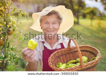 Senior woman in her garden harvesting green pepper