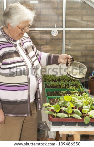 Senior woman inside own greenhouse watering tomato seedlings