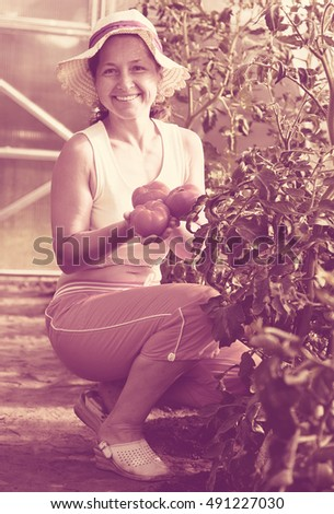 Senior woman is picking tomato in the hothouse