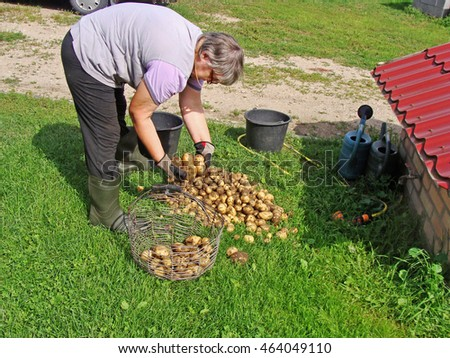 Senior woman near well on grass is sorting newly harvested potatoes.