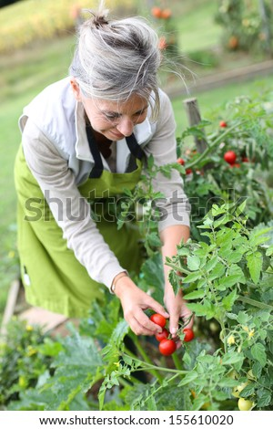 tomato senior singles 35 one-pot meals just right for dinner tonight  choose a slide  with an irresistible sauce made with fire-roasted tomatoes, cinnamon, fresh oregano, .