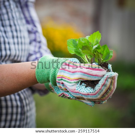 Senior woman planting a seedling in the garden wearing gloves - stock photo
