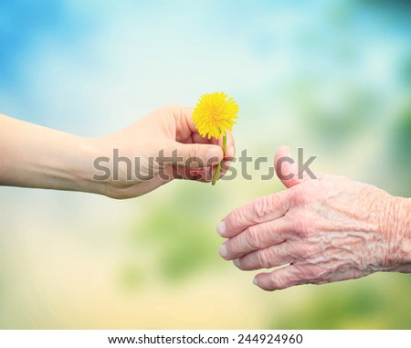 Senior woman sharing a flower with an elderly woman - stock photo