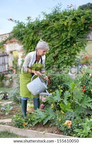 Senior woman watering vegetable garden - stock photo