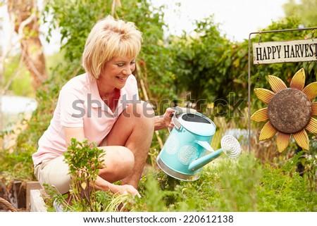 Senior Woman Working On Allotment - stock photo