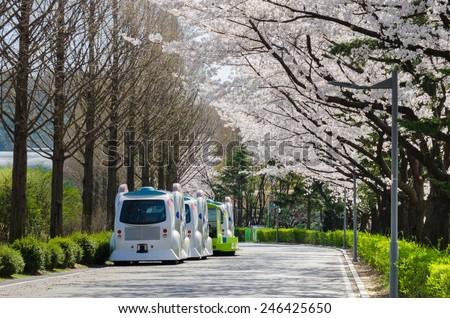 SEOUL, SOUTH KOREA - APRIL 06, 2014: Cherry blossom of Seoul Zoo in Seoul Grand Park, Seoul,South Korea on April 06, 2014. - stock photo