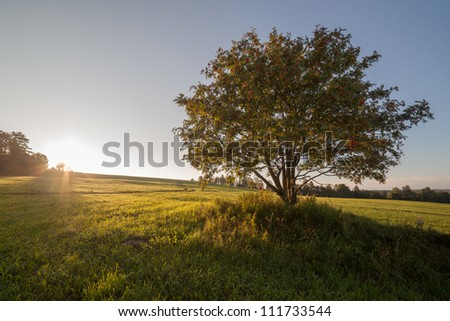 Separate tree in the field on sunrise - stock photo