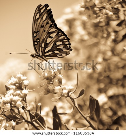 Sepia Butterfly - stock photo