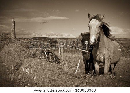 sepia Irish horses and ancient round tower in the beautiful Ardmore countryside of county Waterford Ireland  - stock photo