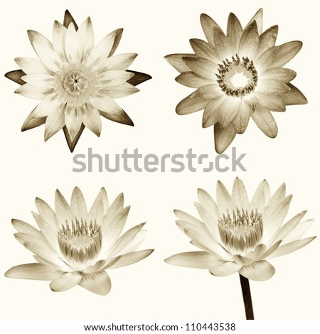 sepia lotus - stock photo