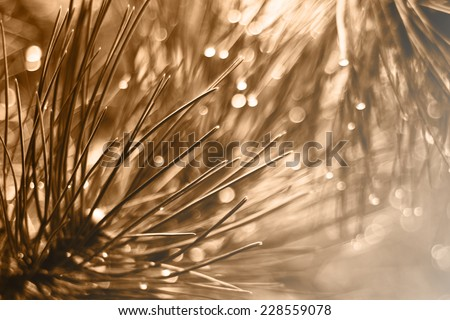 Sepia nature background - close up pine needles with drops of water with blurred background - blurred lights - stock photo