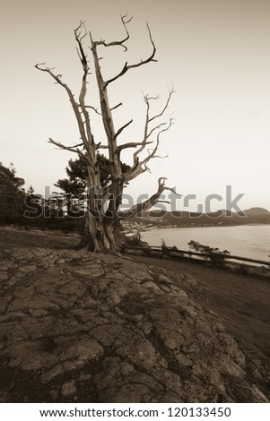 Sepia photo with an old tree background