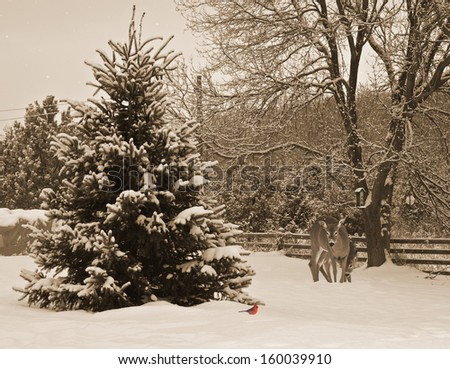 Sepia toned image of a mother, and baby deer curiously examining a bright red cardinal in the snow, waiting to get to the nearby feeder. - stock photo