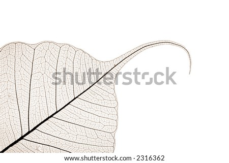 sepia toned leaf skeleton with copyspace for text - stock photo