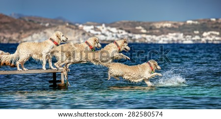 Sequence from a jump into the sea of a Golden Retriever, in Milos island, Cyclades, Greece  - stock photo