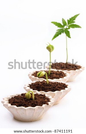 Sequence of a plant growth - stock photo