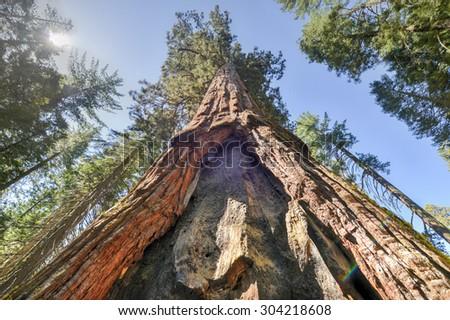Sequoia Gate in Mariposa Grove of Yosemite National Park, California, USA. - stock photo