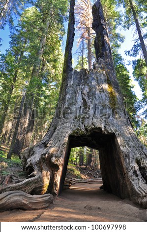 Sequoia Gate in Yosemite National Park, USA - stock photo