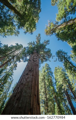 Sequoia national park california look ahead - stock photo
