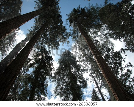 sequoia national park trees