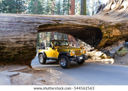 sequoia national park senior singles Find a hotel room at the comfort inn & suites® sequoia kings canyon in three rivers, ca this hotel is located near sequoia national park enjoy free breakfast and wifi.