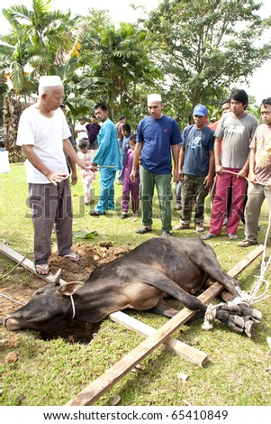 SEREMBAN - NOVEMBER 17: An Ederly Muslim giving advice and instruction before a cow is being slaughter during Eid Al-Adha Al Mubarak, the Feast of Sacrifice November 17, 2010 in Seremban, Malaysia. - stock photo