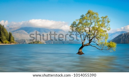 Serene Morning Lake Wanaka Symbolic Willow Stock Photo Royalty Free