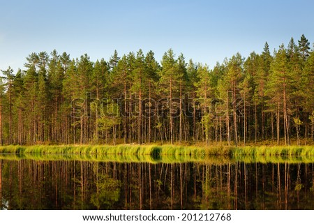 Serene sunny morning forest reflection - stock photo