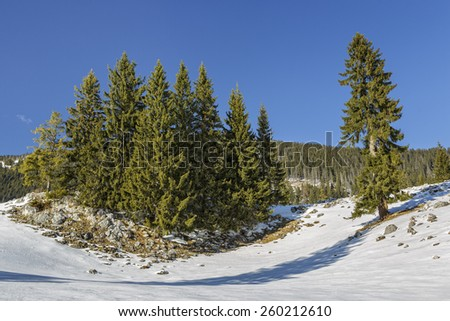 Serene winter landscape with an isolated fir trees clump in a snowy mountain meadow on a sunny day. - stock photo