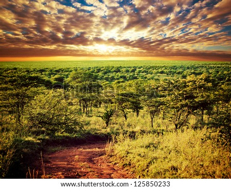 Serengeti savanna landscape with road at sunset in Tanzania, Africa.