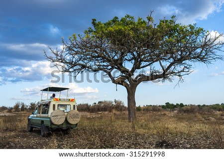 SERENGETI, TANZANIA - AUGUST 27, 2015: Safari car stops to observe a lioness laying down in the tree in the Serengeti National Park, Tanzania, Africa - stock photo