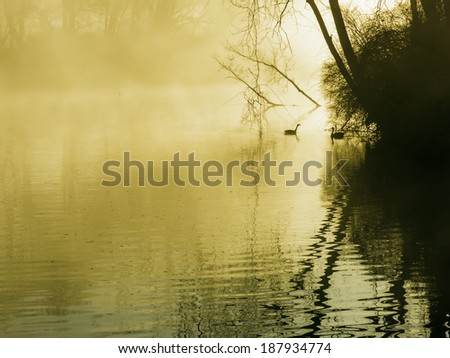 Serenity at sunrise: Two geese in silhouette approach each other calmly on a misty river on a spring day in southwestern Michigan, USA - stock photo