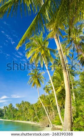 Serenity Shore Beautiful Beach  - stock photo