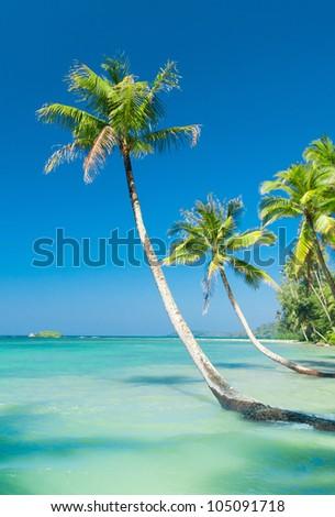 Serenity Shore Exotic Paradise - stock photo