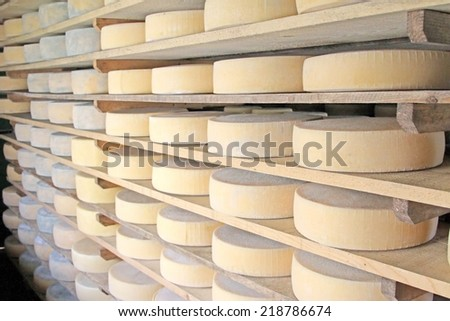 series of forms of aged cheese in the dairy of a mountain hut