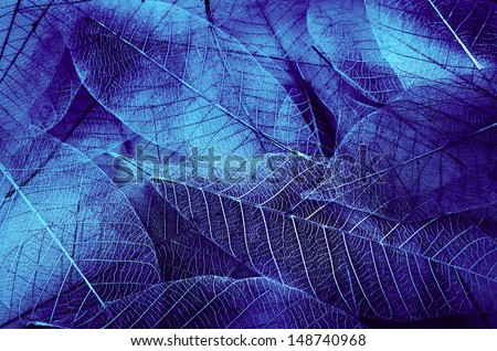 series of leaf textures in fresh colors - stock photo