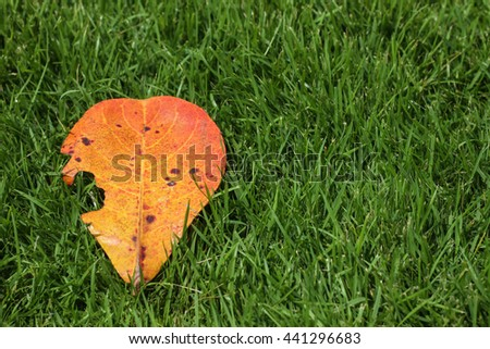 series of leaf textures in fresh colors on the grass