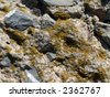 Series of the textures (stone and moss) - stock photo