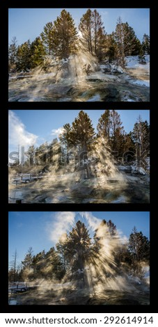 Series of three photos where the light through the tress became more spectacular with each one - stock photo