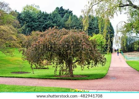 Royal botanic gardens stock images royalty free images vectors shutterstock for Royal botanic garden edinburgh
