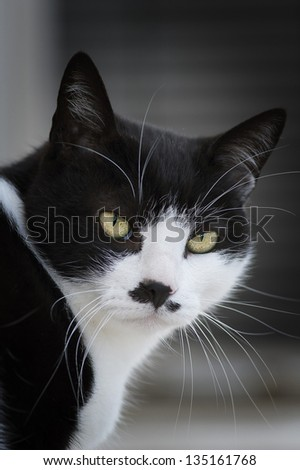 Serious cat - stock photo