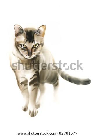 Serious cat - stock photo