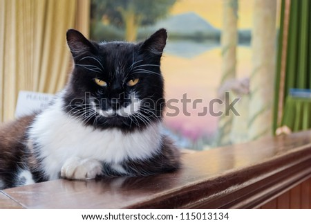 Serious cat with yellow eyes - stock photo