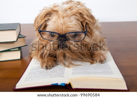 Serious dog in the glasses read a book - stock photo