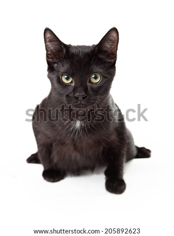 Serious looking black kitten looking straight into camera in a pounce stance with one paw outstretched