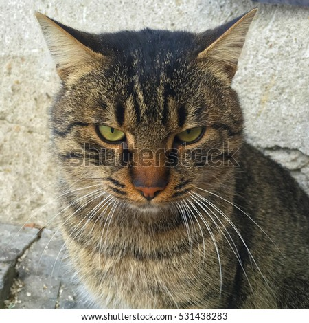 Cat Face Stock Photos, Royalty-Free Images & Vectors ...