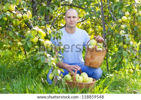 serious man with basket of harvested apples in garden