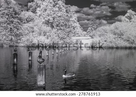 Serpentine lake in Hyde Park, London UK - Infrared black and white landscape