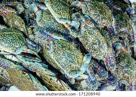 Serrated mud crab (Scylla serrata) tied and row display for sale in street market of Thailand - stock photo